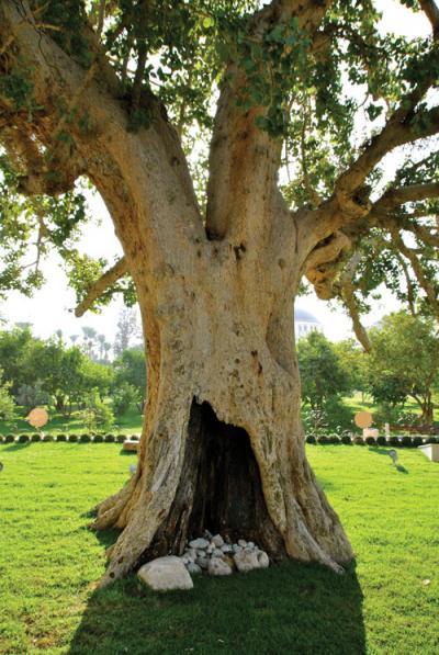 Site de rencontre juif messianique